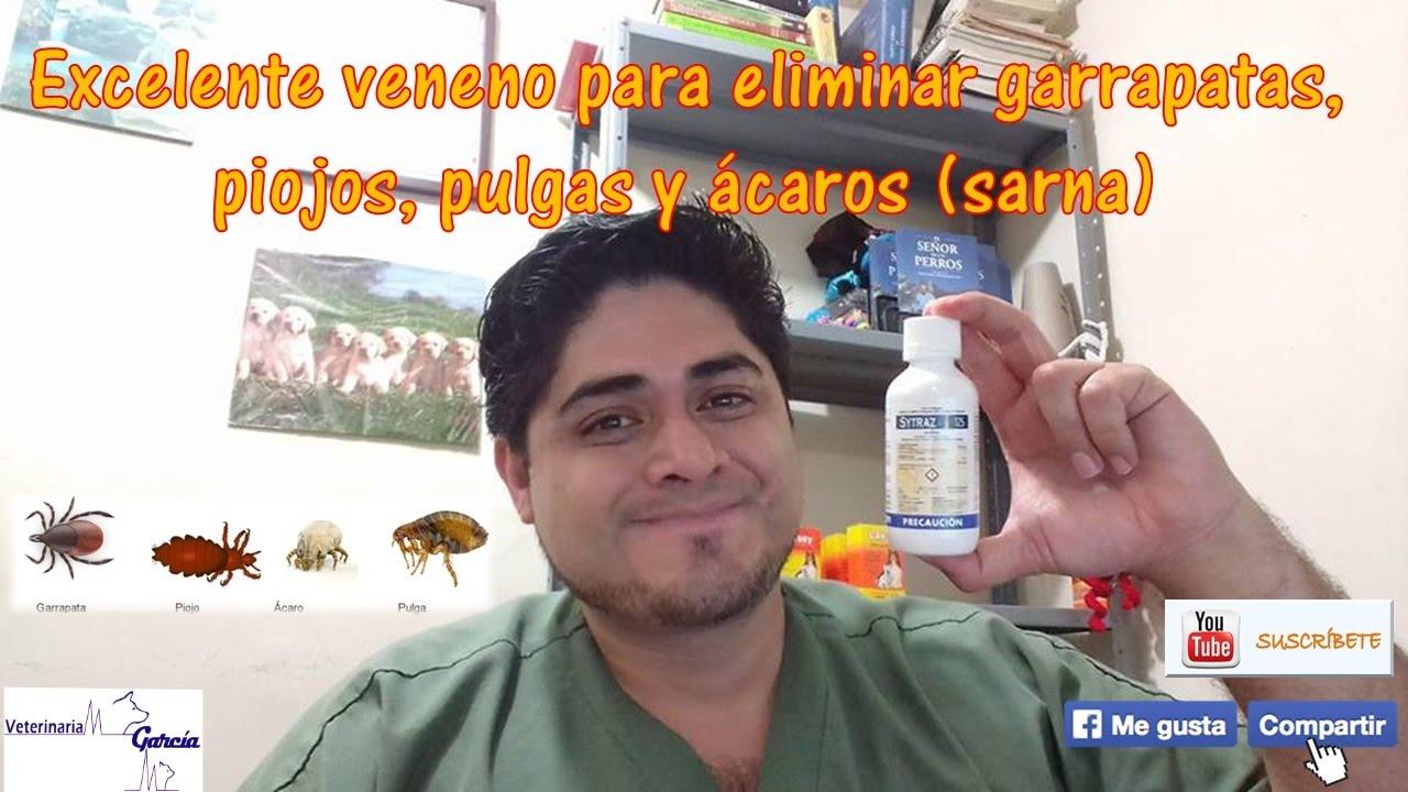Como se usa el amitraz veneno contra garrapatas youtube - Matar pulgas en casa ...