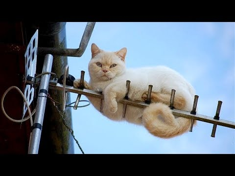 TRY NOT TO LAUGH LIKE HELL! IMPOSSIBLE! - Funny ANIMAL compilation