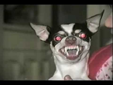 My Dog From Hell Show