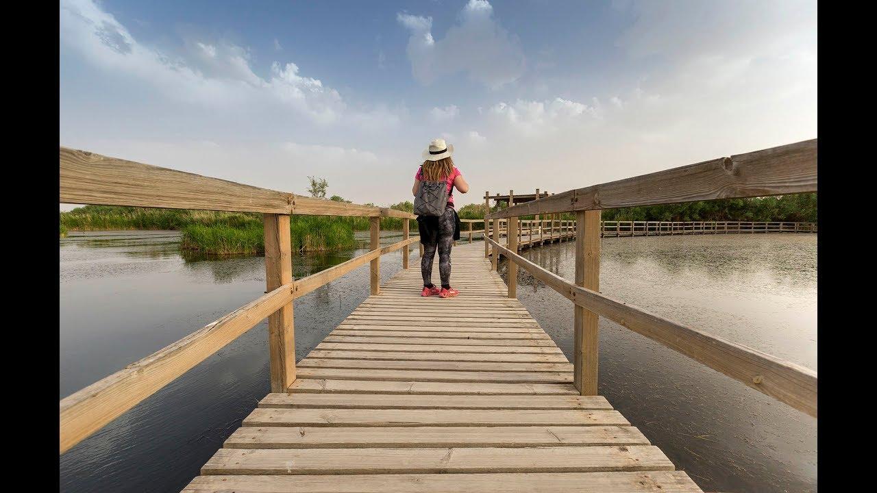 Azraq Wetland reserve & Shaumari Wildlife reserve - Wild Jordan -