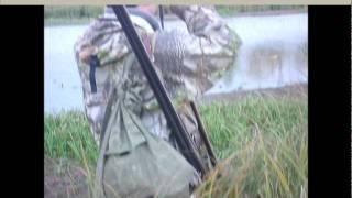 Охота лабрадора-ретривера на утку.wmv
