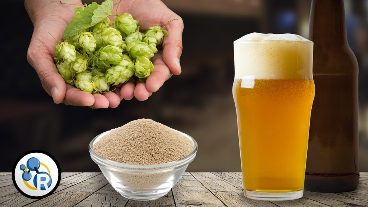 Craft beer chemistry youtube for Best place to buy craft beer online