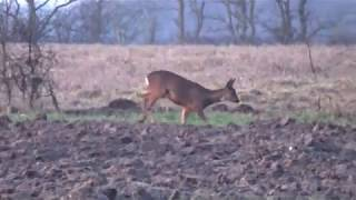large doe shot with a .308