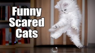 Cats Getting Scared And Startled  (2021 Video Compilation)