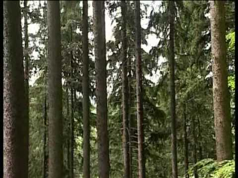Polish State Forests