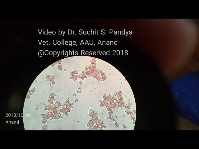 Live Trypanosoma in Wet Blood Smear of Horse.....