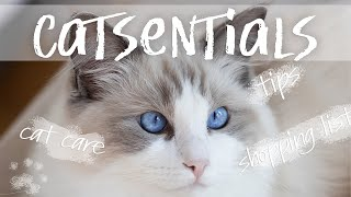 CAT ESSENTIALS | things you need to buy before you get a kitten | Ragdolls Pixie and Bluebell
