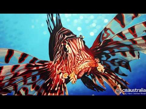 CISaustralia - Lion Fish Removal & Marine Conservation in Belize