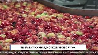 Переработано рекордное количество яблок
