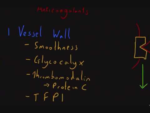 Haemostasis 6: Anticoagulant Factors