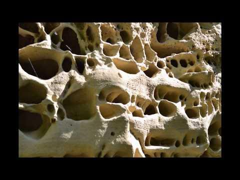 Fessa di Smerillo, Fossil Pliocene Shells over 3 million years old (manortiz)