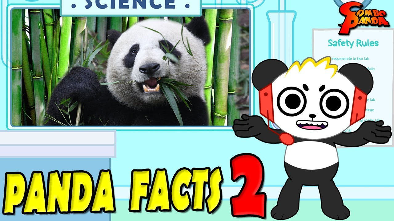 Learn Panda Facts with Combo Panda Educational Video! Part 2!