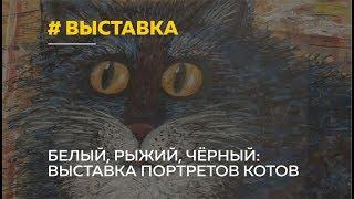 Рыжий, черный, белый. В Барнауле открылась выставка портретов котов