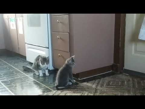 Cat attack cabinet