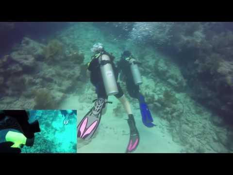 Rainbow Reef Dive #3 - Molasses Reef
