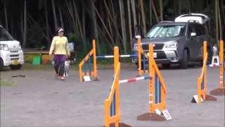 2015.9.21 春馬 アジリティーレッスン 36日目 @Agility Club Funny Run.