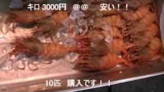 築地市場【わけあり係長】-オニエビ(イバラモエビ)-No1.wmv