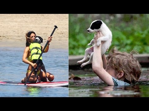 Great People Saving Animals Lives #5