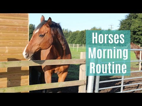Horses Morning Routine