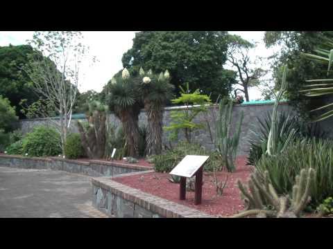 Succulent Garden Sydney