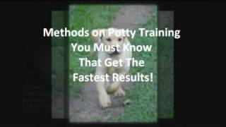 Most Wanted Potty Training A Labrador Puppy