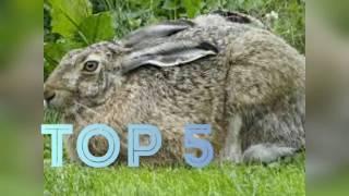 Top 5 Fastest Animals