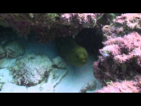 Underwater video Curacao (Caribbean sea) diving in curacao