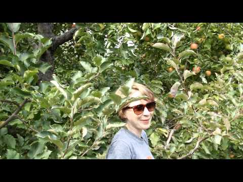 Sophie goes crazy in the apple orchard