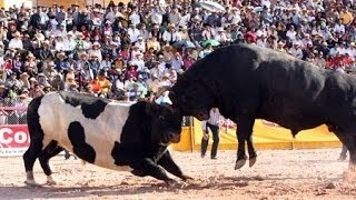 funny videos don t mess with the bull people fails bull fighting stupid people doing stupi