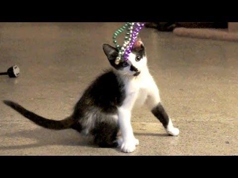 Kodi the Sweet Kitten
