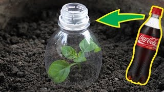 Top 5 Awesome Life Hacks for Plastic Bottle - Garden Hacks