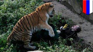 ロシアの動物園でシベリアンタイガーに襲われた女性飼育員を、その場に...
