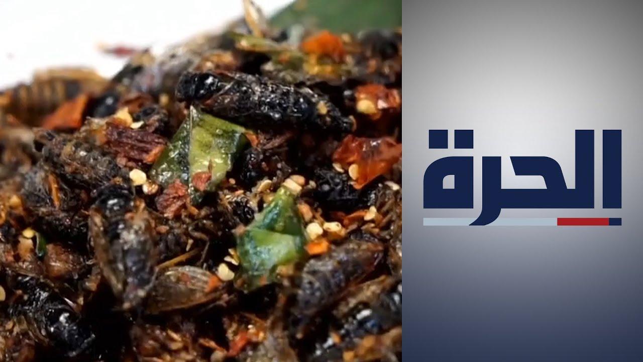 """مطعم في أميركا يقدم """"حشرة السكيدا"""" مباشرة من الطبيعة  - 18:55-2021 / 6 / 17"""
