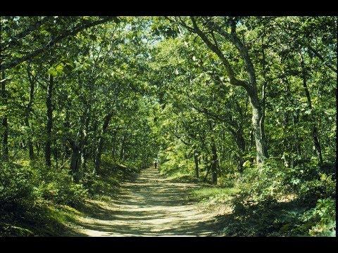 """""""The Majestic Cedar"""" - Fr. Pierre Ingram"""