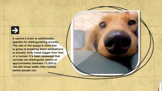 Dog Facts: A Dog's Sense Of Smell Is 100,000 Times More Acute As That Of Humans
