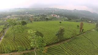 A Tea Plantation : Top of Indonesia (Phantom 2 Vision+)