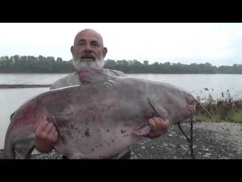 93 Pound Catfish Missouri River