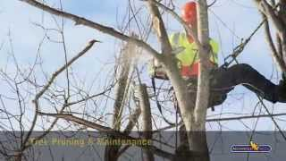 Advanced Tree Care - Our Services