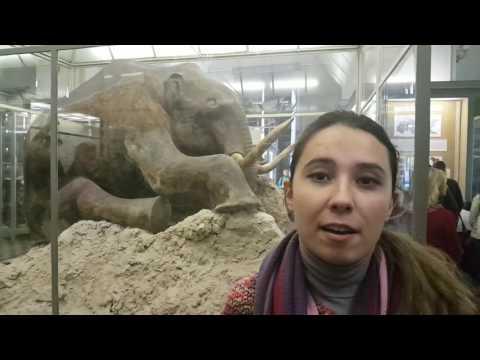 Санкт-Петербург. Экскурсия. Зоологический музей.