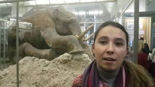 видео Зоологический музей