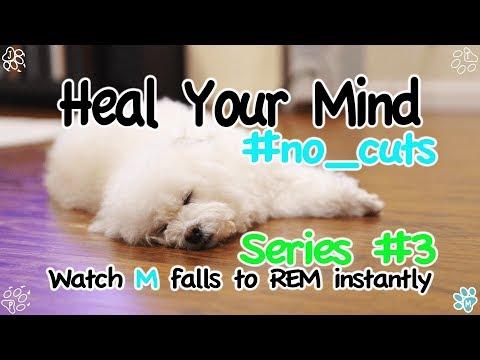 Relaxing Video HYM #3 - Dog falls to REM sleep instantly! (힐링영상 - 빨리 잠드는 강아지 마리)