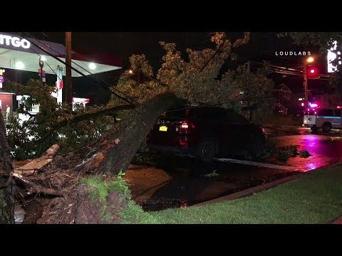 Staten Island: Tree Crashes On Car