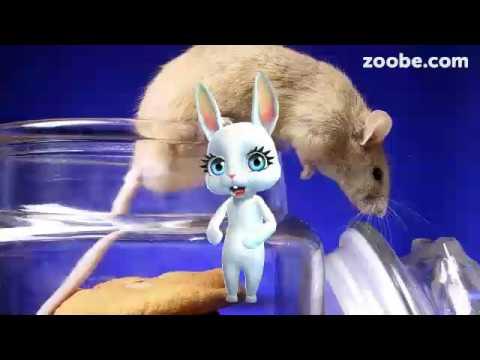 Zoobe Зайка Как я бросила курить - Поиск видео на компьютер, мобильный, android, ios