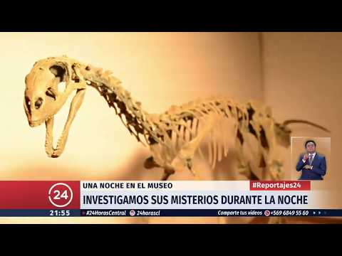 Los secretos y misterios de una noche en el Museo de Historia Natural