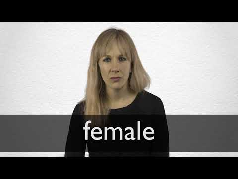 Female definition and meaning | Collins English Dictionary