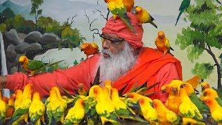 Индийский парк попугаев - в Книге Гиннесса (новости)