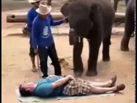 Прикол! Слон делает массаж  Смешное видео