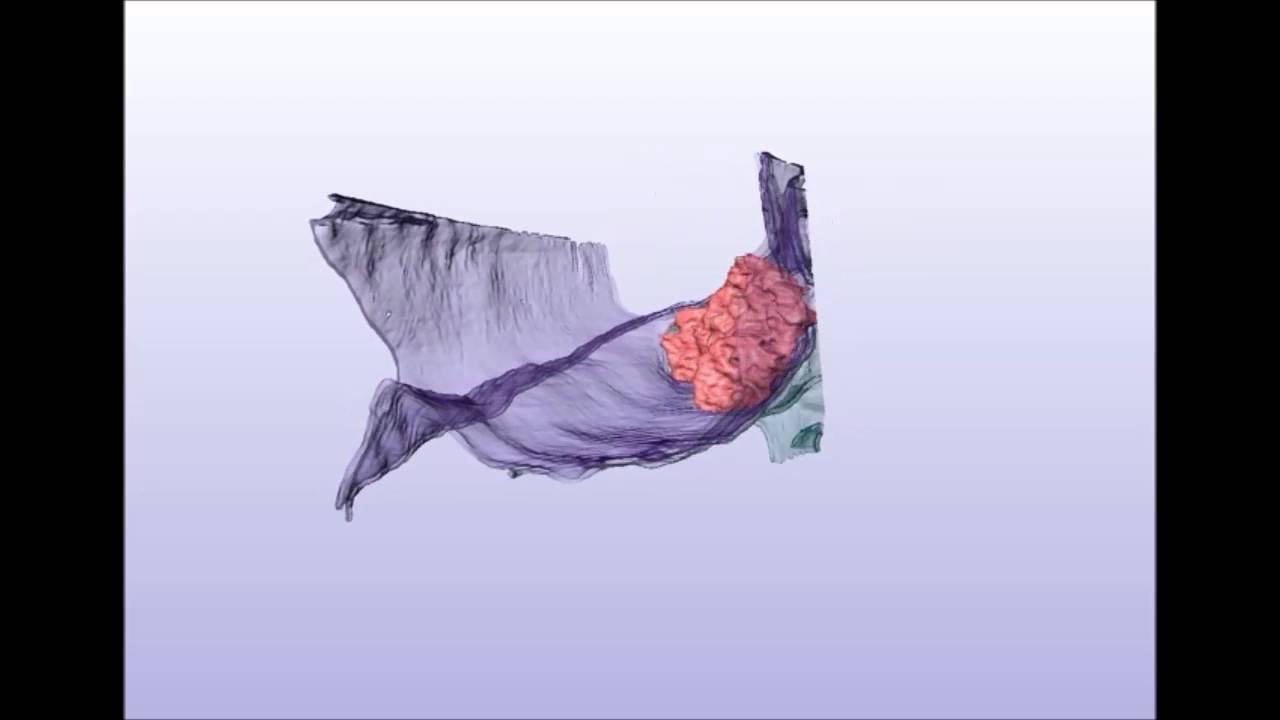 Nanoscale Visualization Of Functional Adhesionexcitability Nodes At
