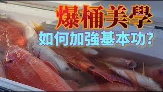 (爆笑敲底)滿滿紅色高級魚-七傷拳不得挑戰