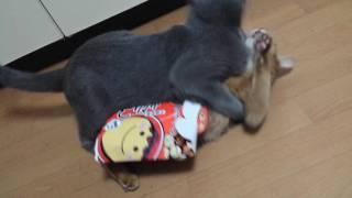 箱にハマって身動きできないメスにも容赦なく襲い掛かる悪猫 thumbnail